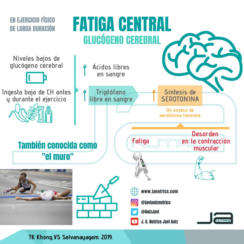 Infografía sobre fatiga central y glucógeno cerebral